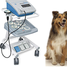Medical Instruments for Diagnostics for Pets